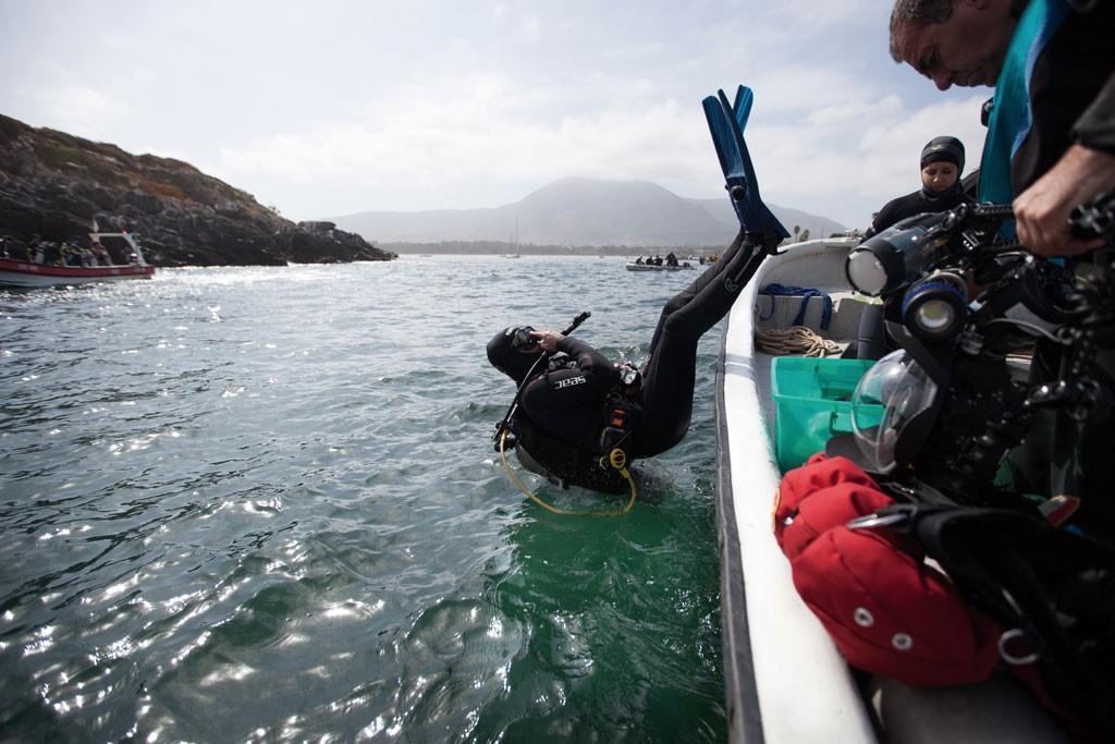 Ingresa el buzo al agua y luego el ayudante le pasa el equipo fotográfico, un proceso protocolizado y extremadamente cuidadoso.