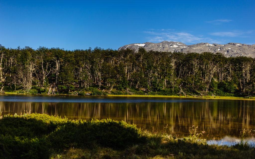 Un claro en el bosque donde se juntó agua, en una planicie que se inundó y como espejo refleja el bosque que nos rodea.