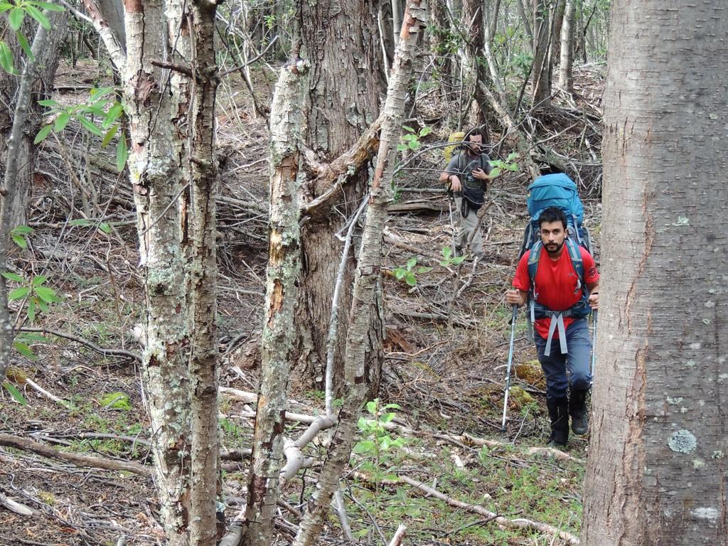 Ascendiendo durante el primer día por el extenso y denso bosque que cubre las faldas del Monte  Donoso.