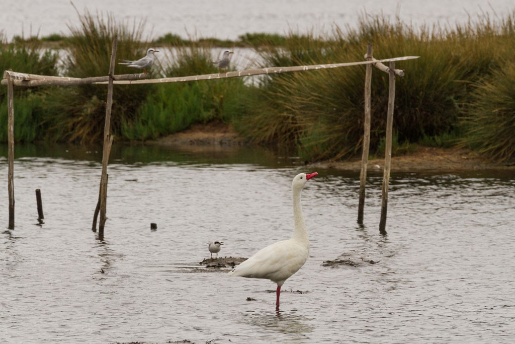 Cerca de 60 especies de aves pasan y anidan en el Humedal de Cáhuil.