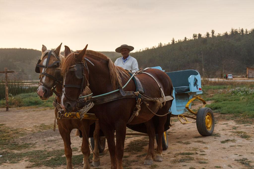 El paseo en cabrita se realiza durante todo el verano, durante toda la semana. Desde Cáhuil a la Villa.