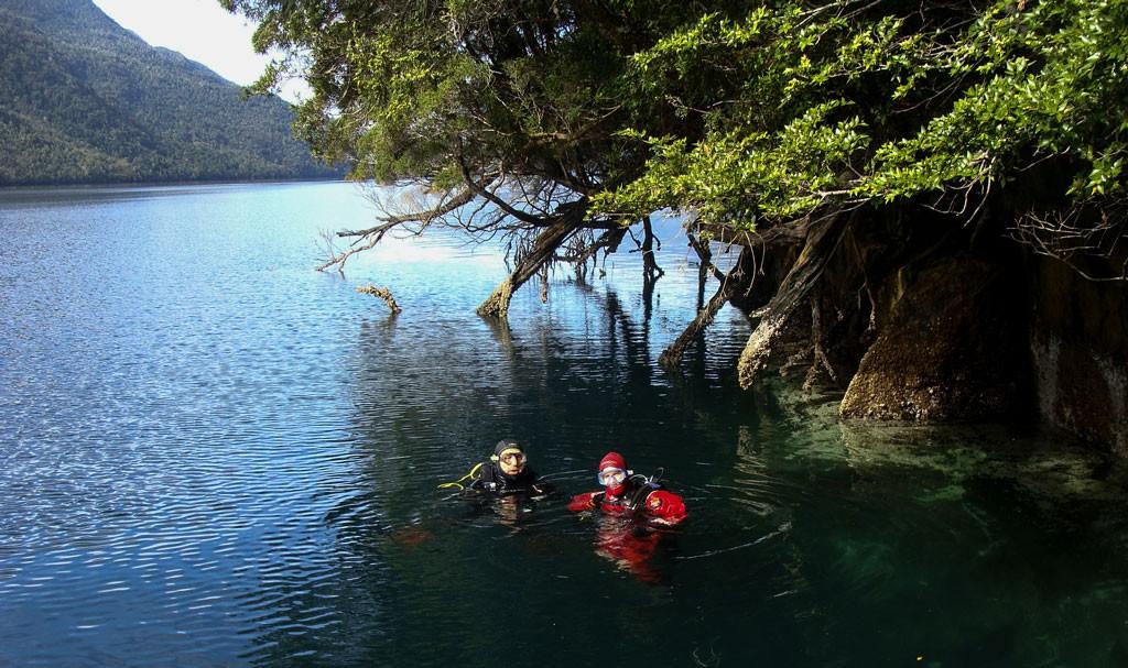 Buzo admirando la belleza del fondo en Isla Jaime, junto a actinias con abundancia de vida y mucho coral Buceando en el Sector el Pillan, en plena toma de muestras de crecimiento de coral.
