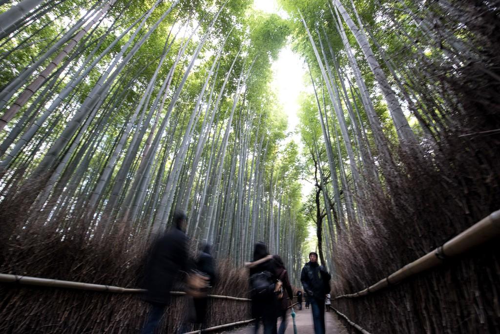 Los japoneses creen que en la naturaleza se encuentran los Dioses. El bambú es una planta muy importante para su cultura ya que se asocia con la fuerza de los hombres, es por esto que Arashiyama es un lugar tan importante en Japón.