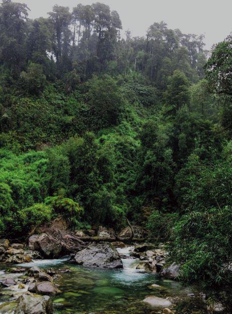 El río Sin Nombre corre libre y transparente, envuelto en la exhuberante vegetación.