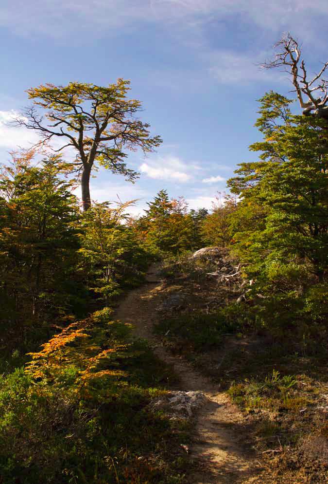 Al adentrarnos en el Fundo Altavista, nos encontramos con una antigua huella de 20 kilómetros...